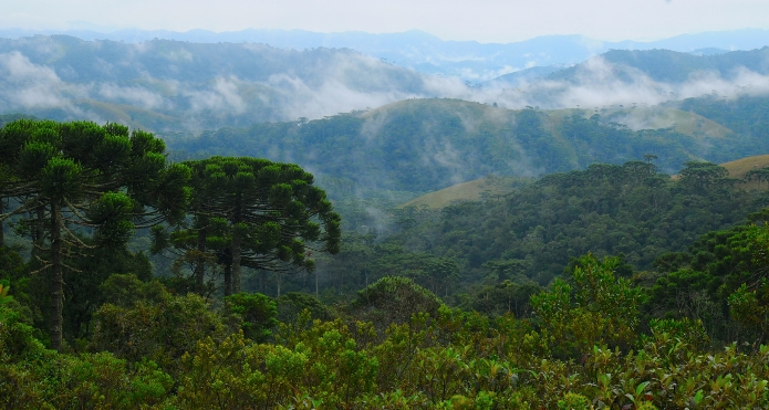 The cloud forests of Brazil, by R. Oliviera, one of the plant scientists behind this new research