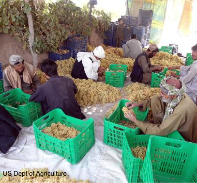 Farmers in Pakistan prepare their grape harvest for cold storage, helping them reach new customers.