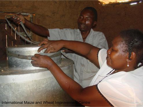 Keeping the crop safe - farmers in Kenya using improved storage methods to control post-harvest losses.